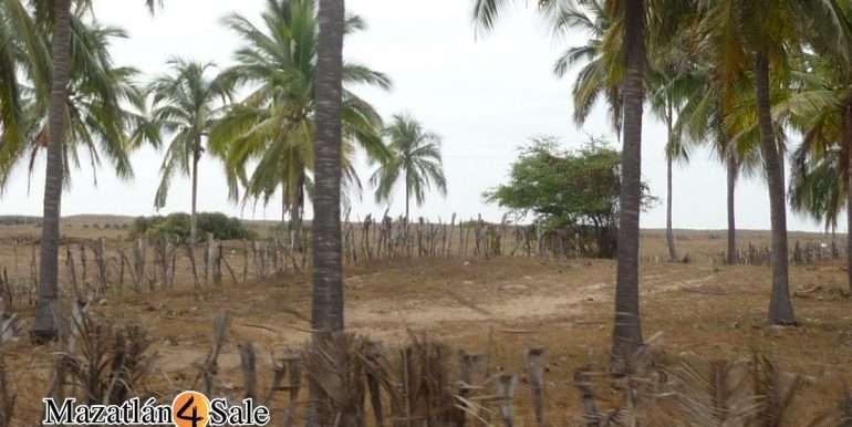 M4S-005-Playa-El Caimanero-Land For Sale-Mazatlan-8