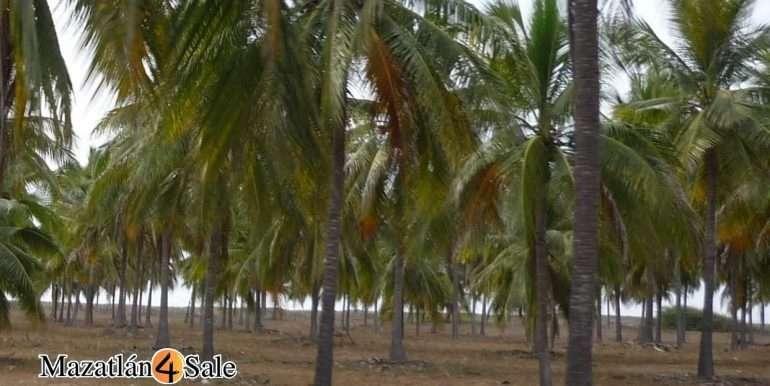 M4S-005-Playa-El Caimanero-Land For Sale-Mazatlan-5